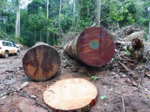 MUKULUNGU SIDE - 刚果铁木