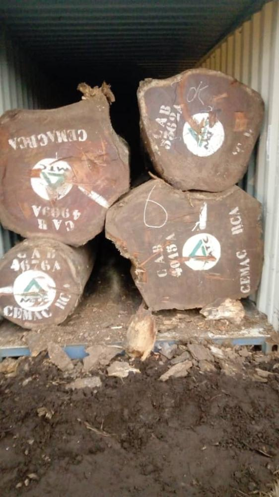 SHIPPING PACHYLOBA - 非洲厚叶缅茄木