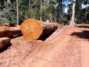 MUKULUNGU BRETELLE - 刚果铁木