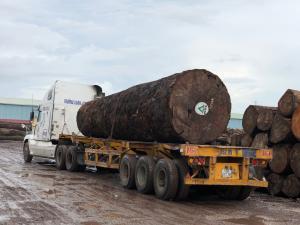 MUKULUNGU MTC VIETNAM - 刚果铁木