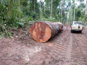MUKULUNGU - 刚果铁木